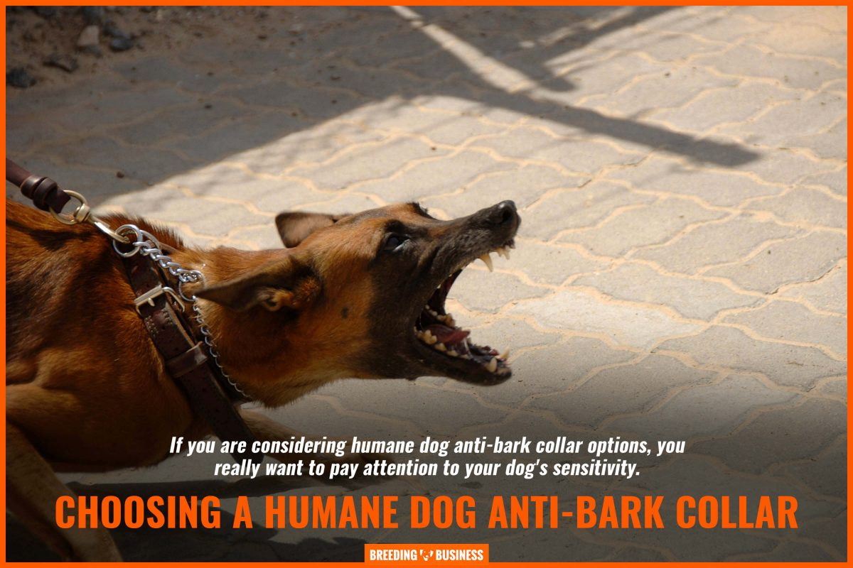choosing a humane dog anti-bark collar