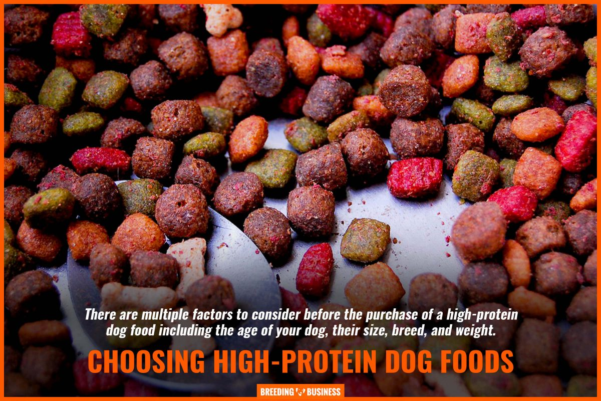 choosing high-protein dog  foods