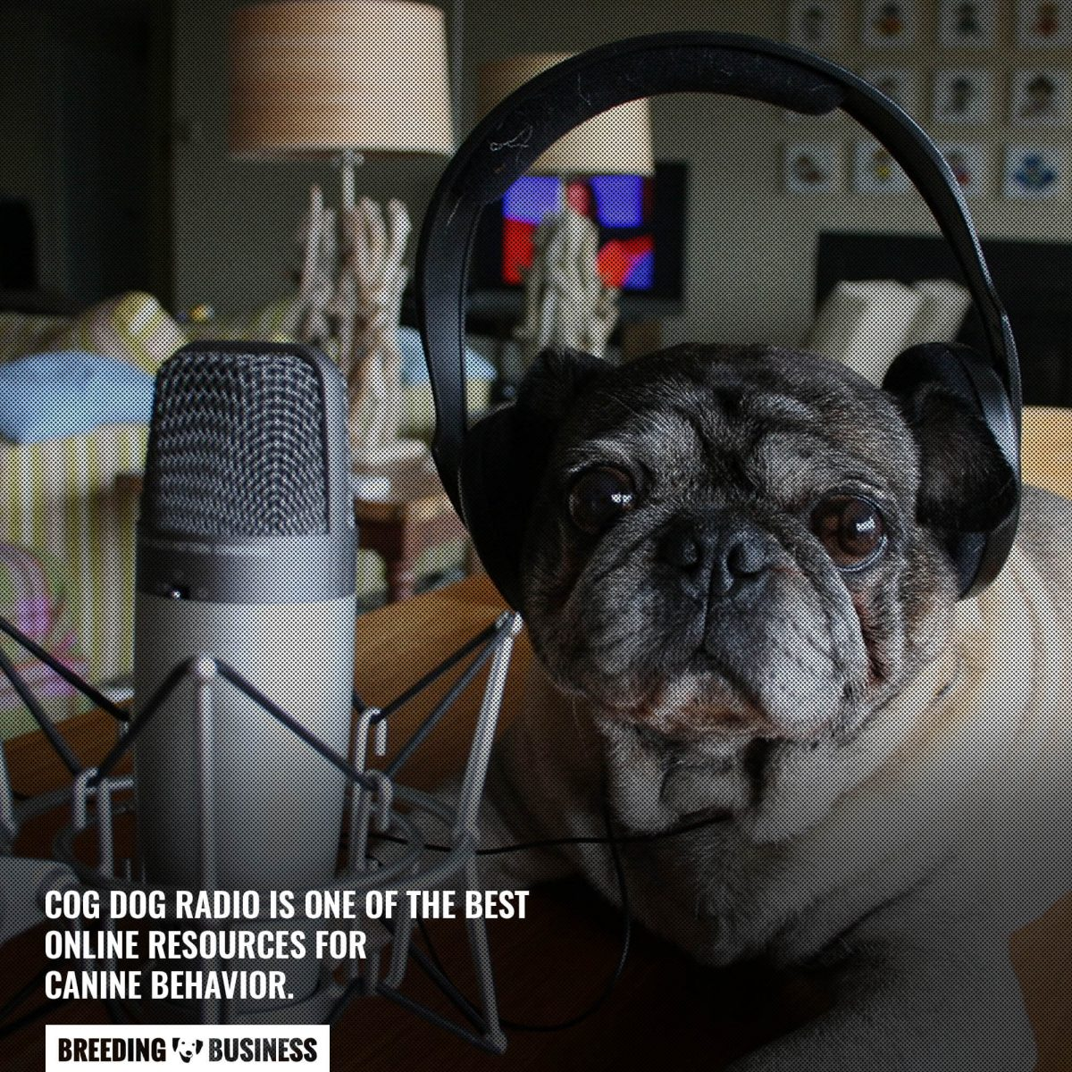 cog dog radio podcast