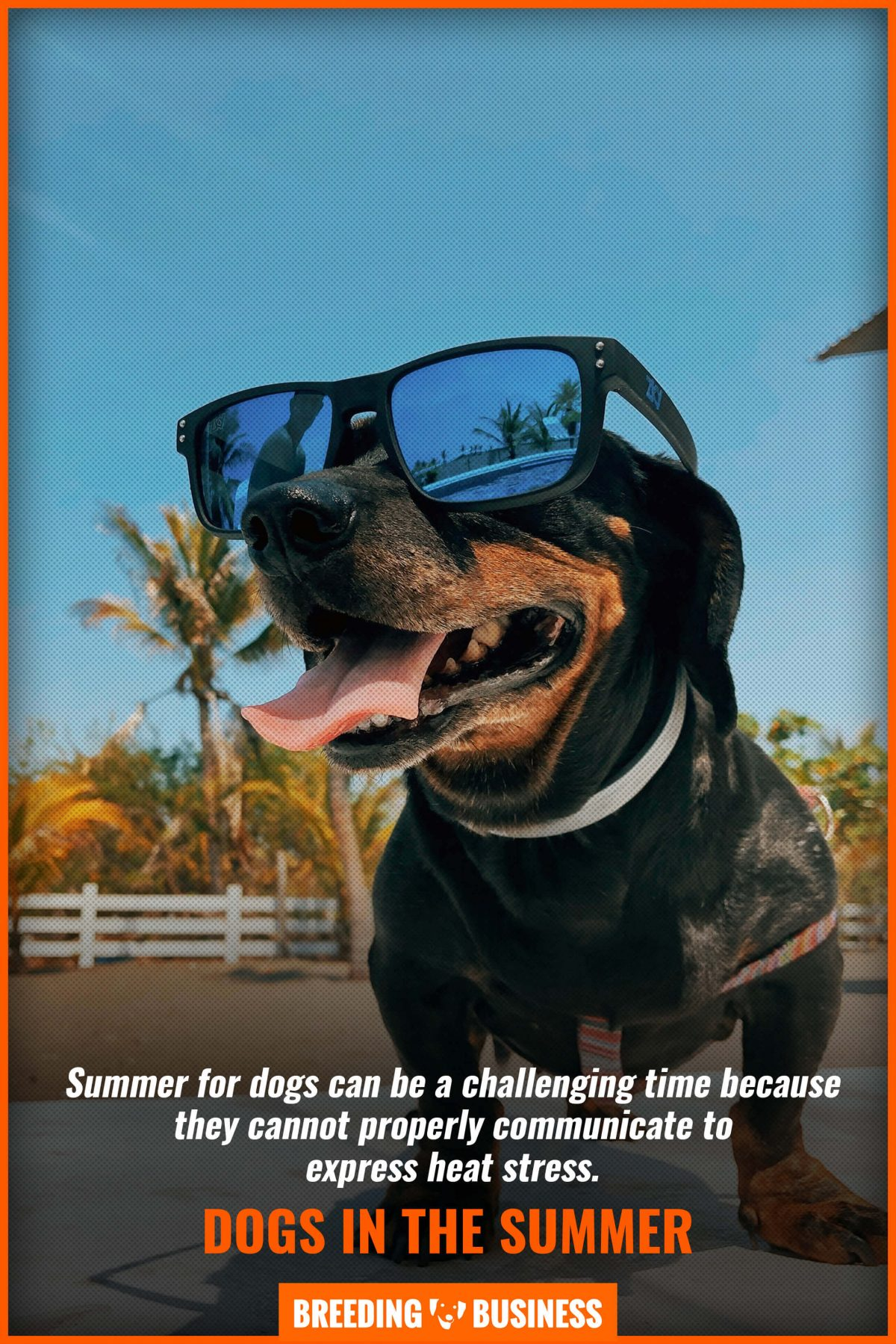 dogs in the summer