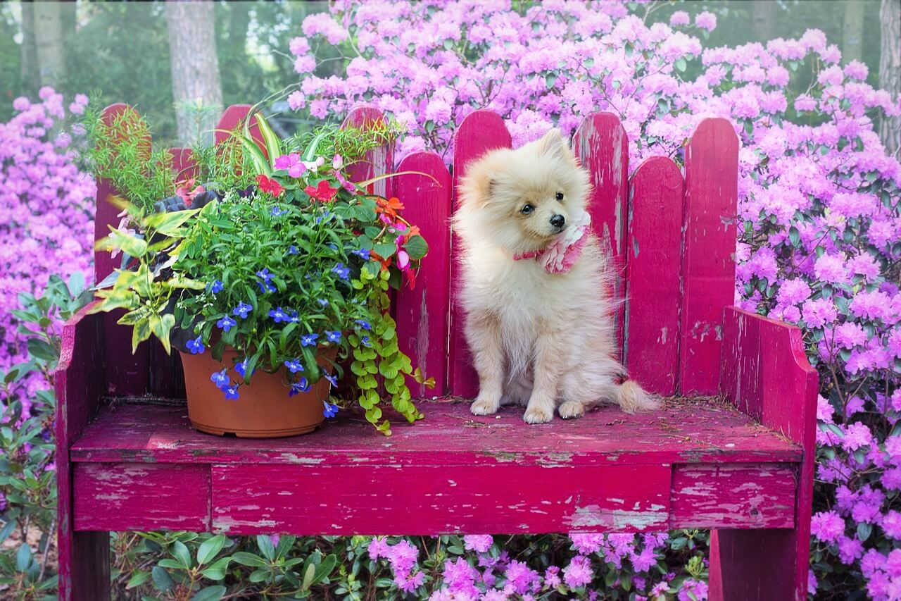 Girly Dog Names – 170+ Feminine Names For Cute Puppies!