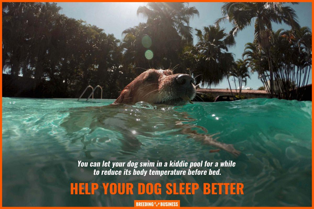help your dog sleep better