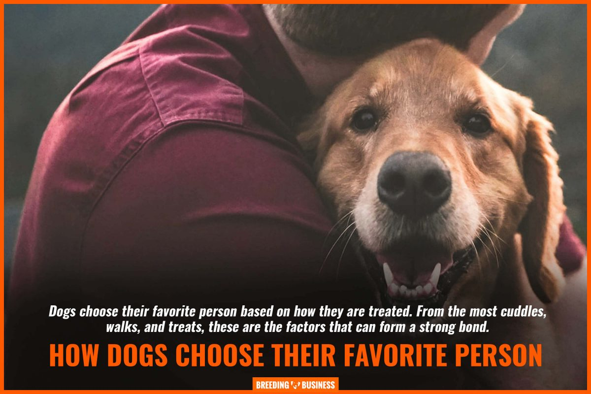 how dogs choose their favorite person