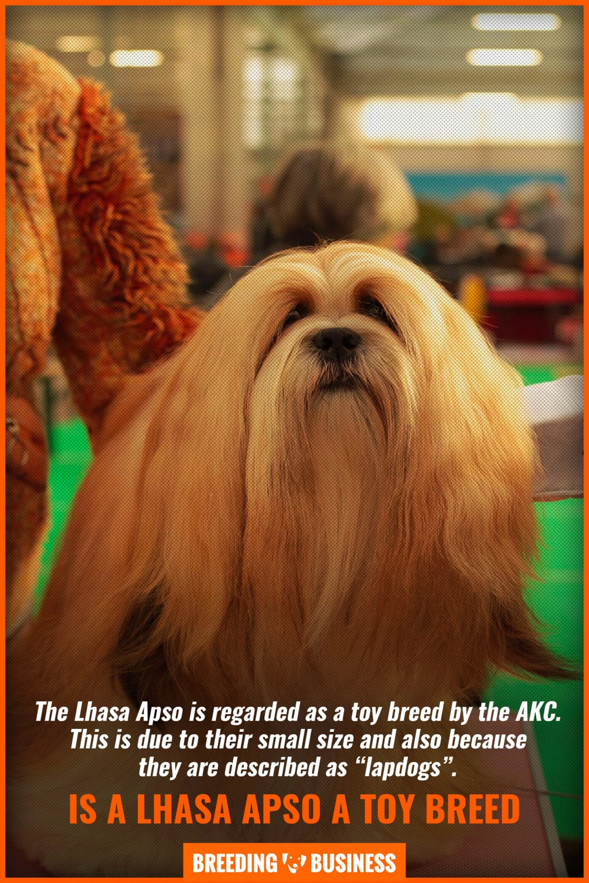 is a lhasa apso a toy breed