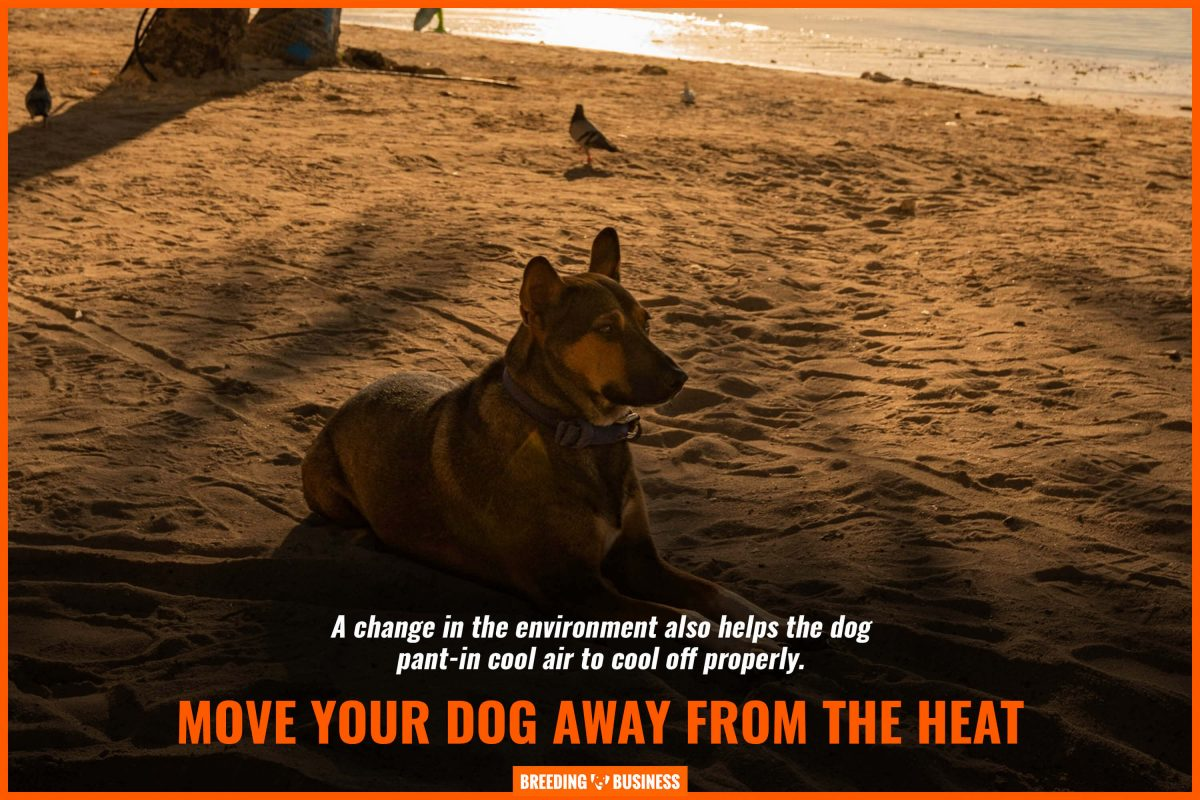 move your dog away from the heat