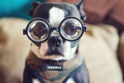 Nerdy Dog Names – an Amazing List of 100+ Geeky Names for Puppies!