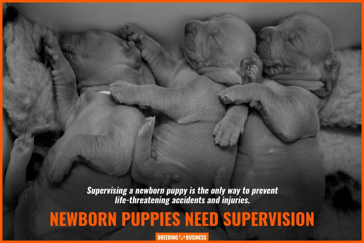 newborn puppies need supervision