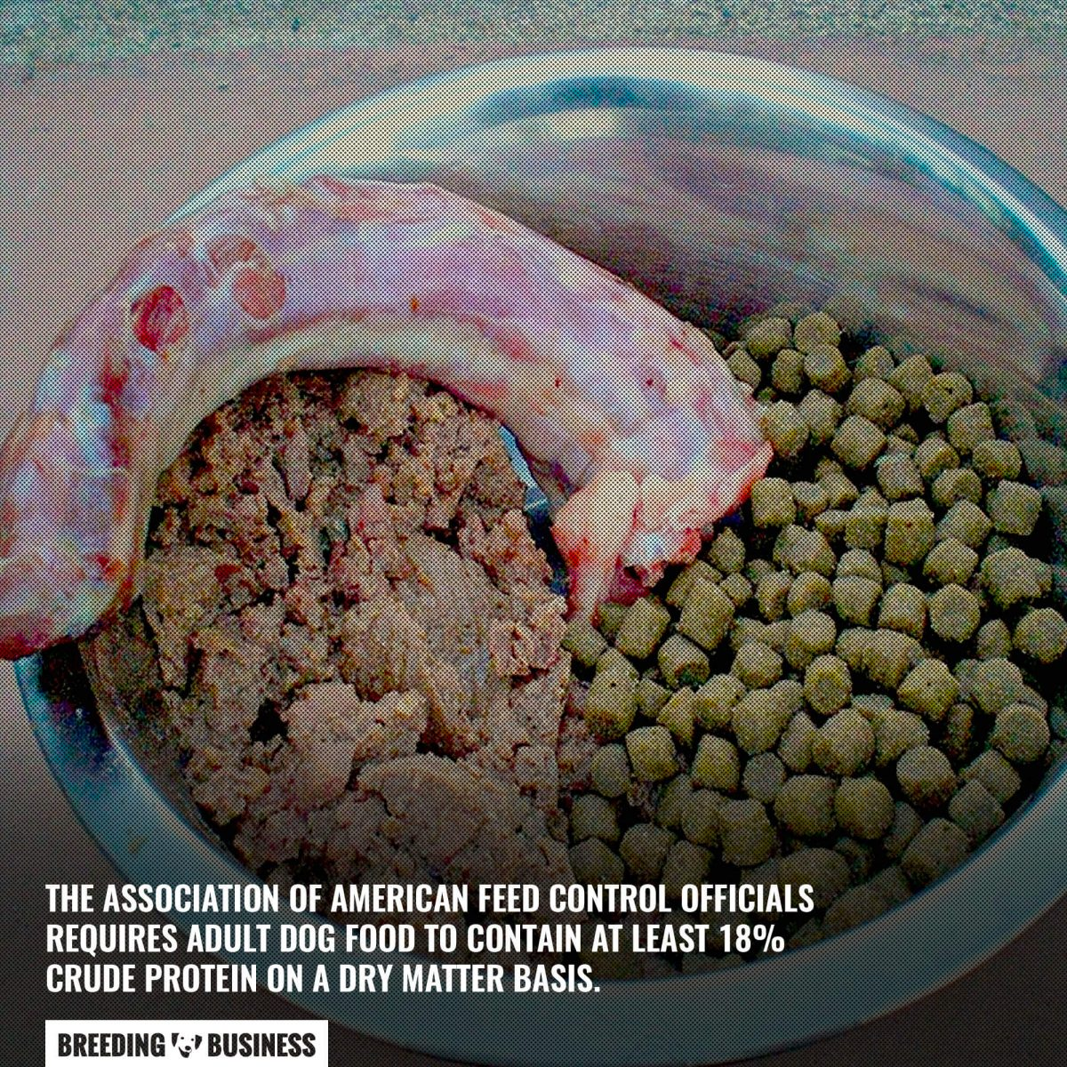 protein requirement for dogs
