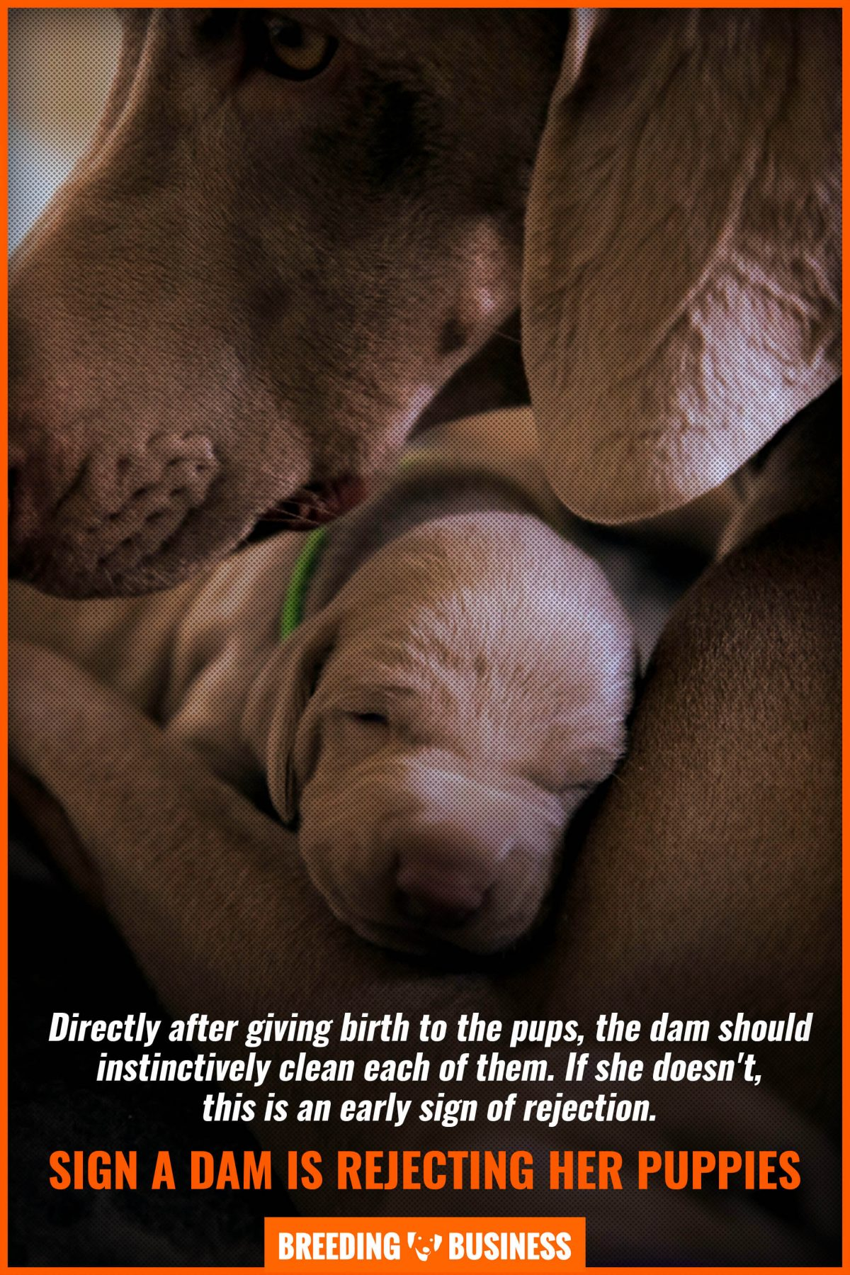 sign a dam is rejecting her puppies