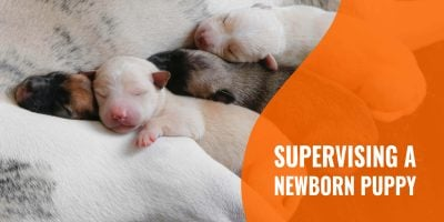 supervising a newborn puppy