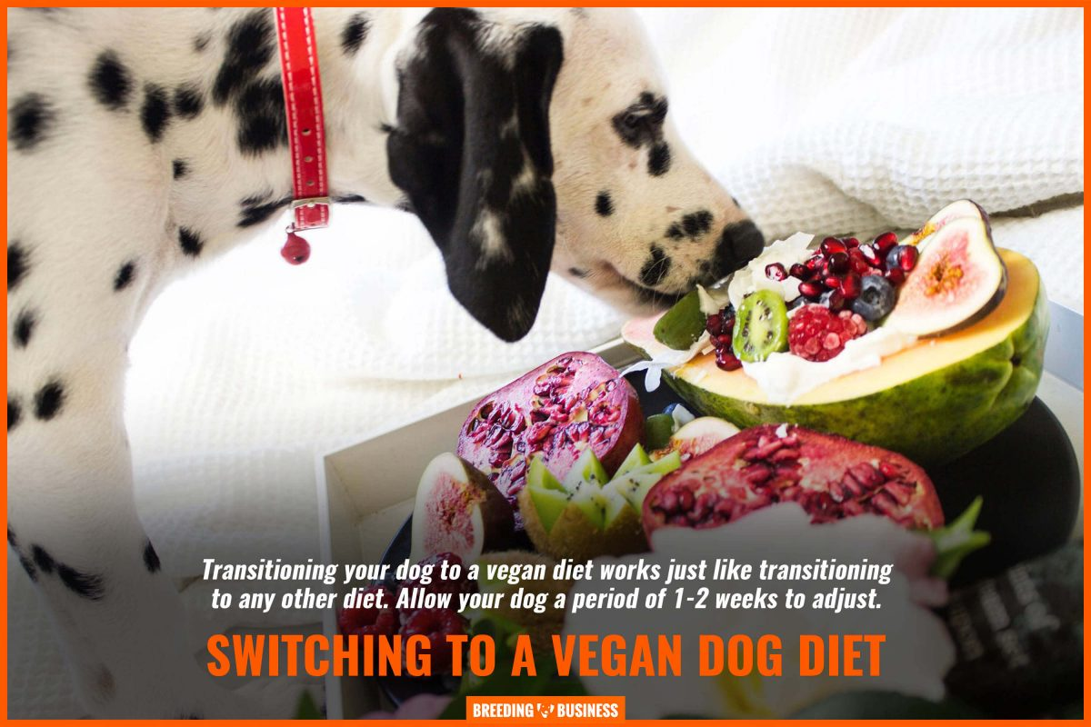 switching to a vegan dog diet