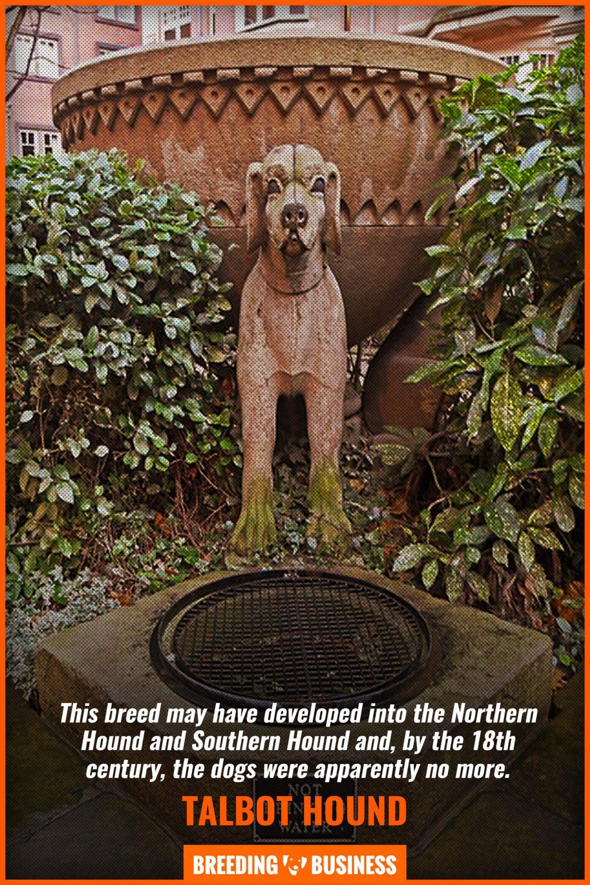talbot hound