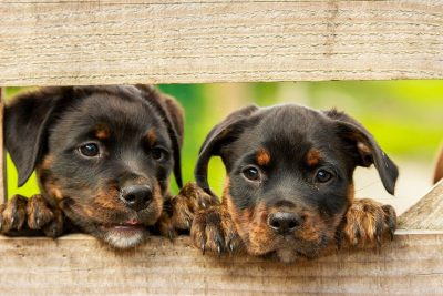 Unisex Dog Names – Over 120 Gender-Neutral Names For Boy & Girl Puppies