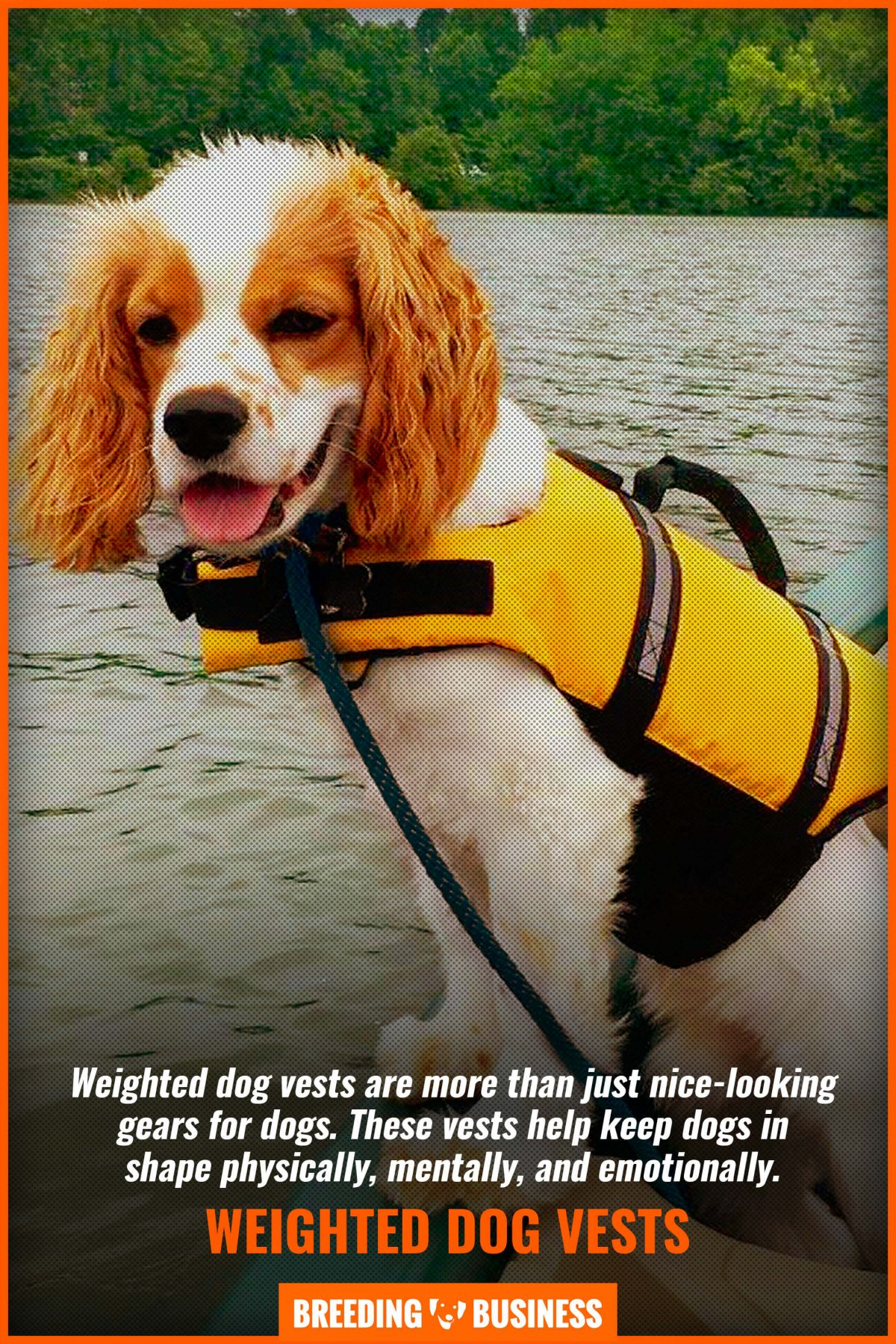 weighted dog vests