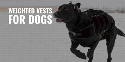 Weighted Vests for Dogs – What Are They, Uses, Top Reviews & FAQ