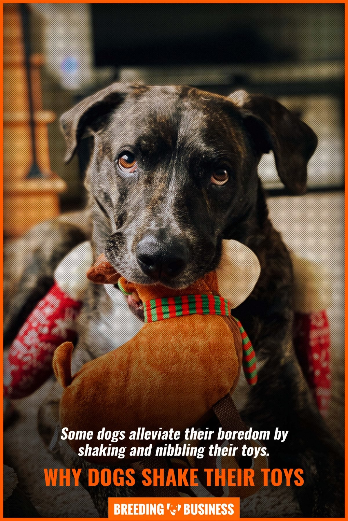why dogs shake their toys