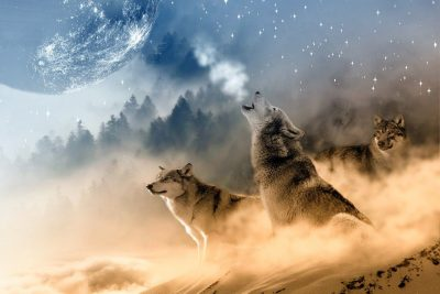 Wolf Names for Dogs – Over 300 Wolf-Inspired Puppy Names!