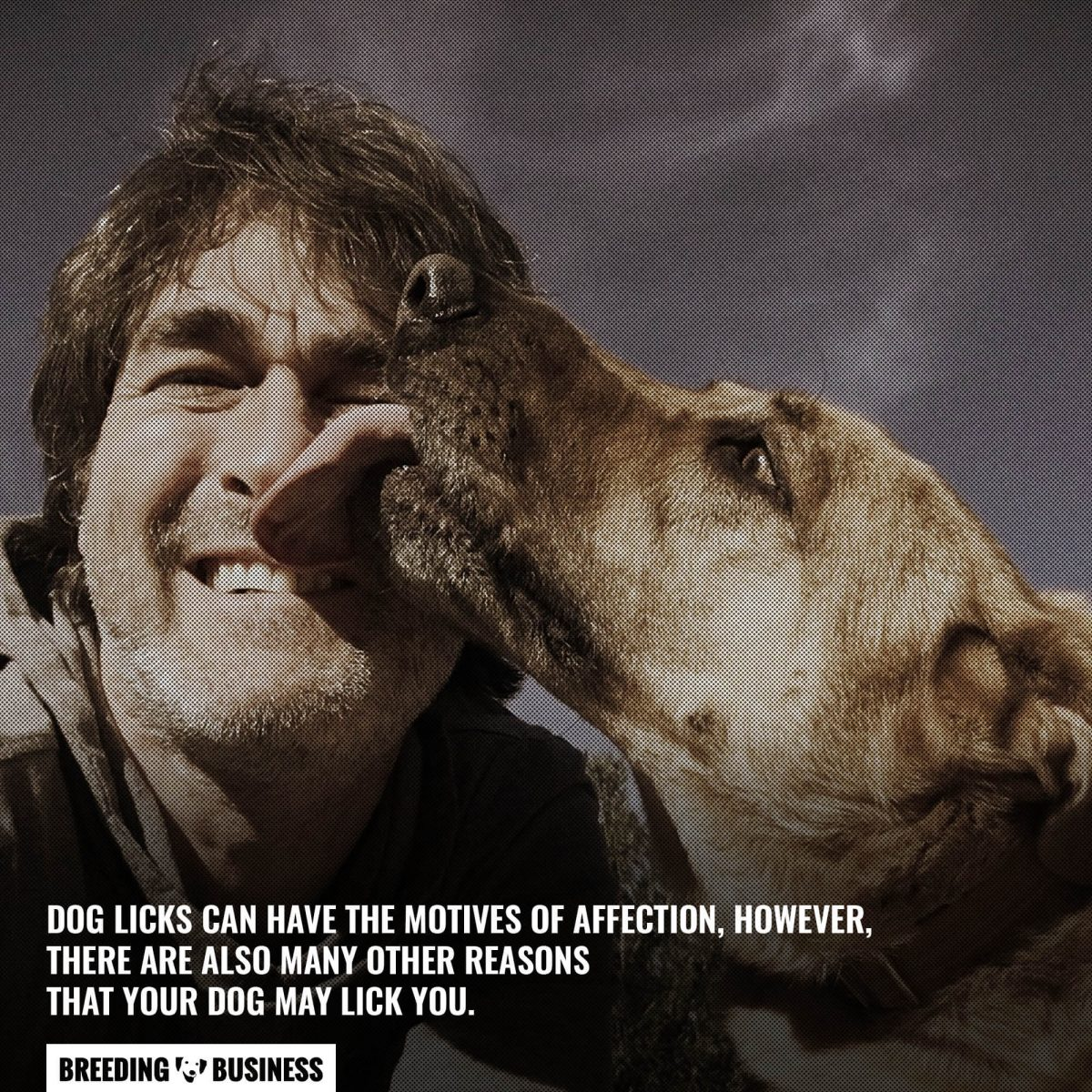 affectionate licks from dogs