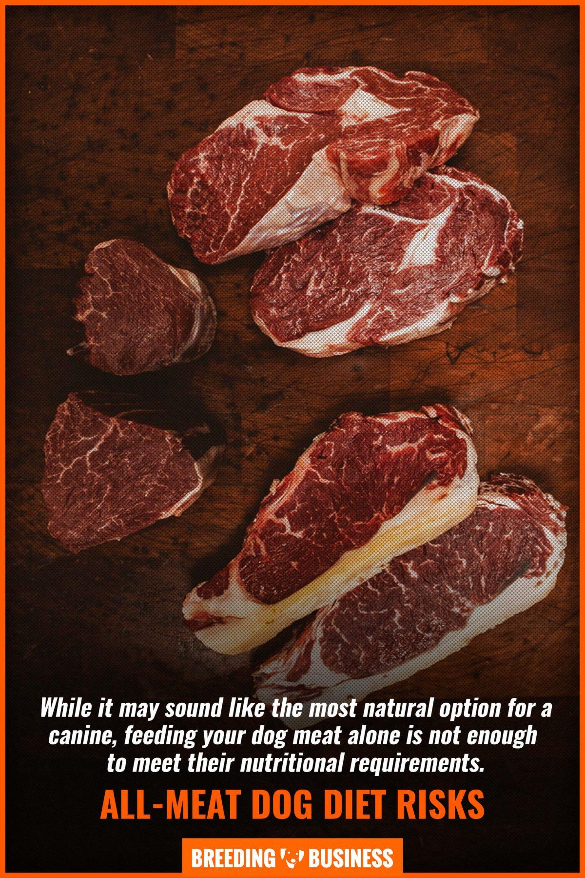 all-meat dog diet risks