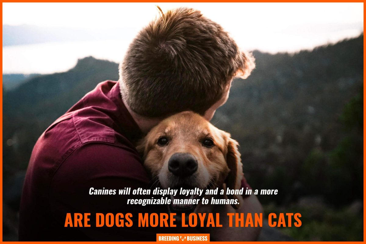 are dogs more loyal than cats