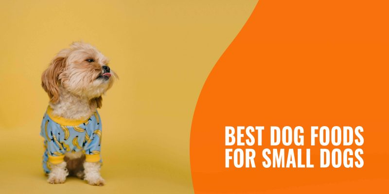 best dog foods for small dogs