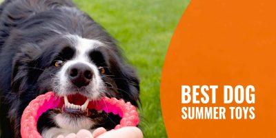 10 Best Dog Summer Toys