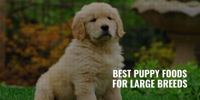 best puppy foods for large breeds