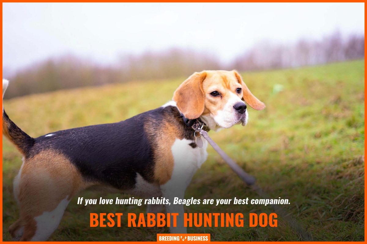 best rabbit hunting dog