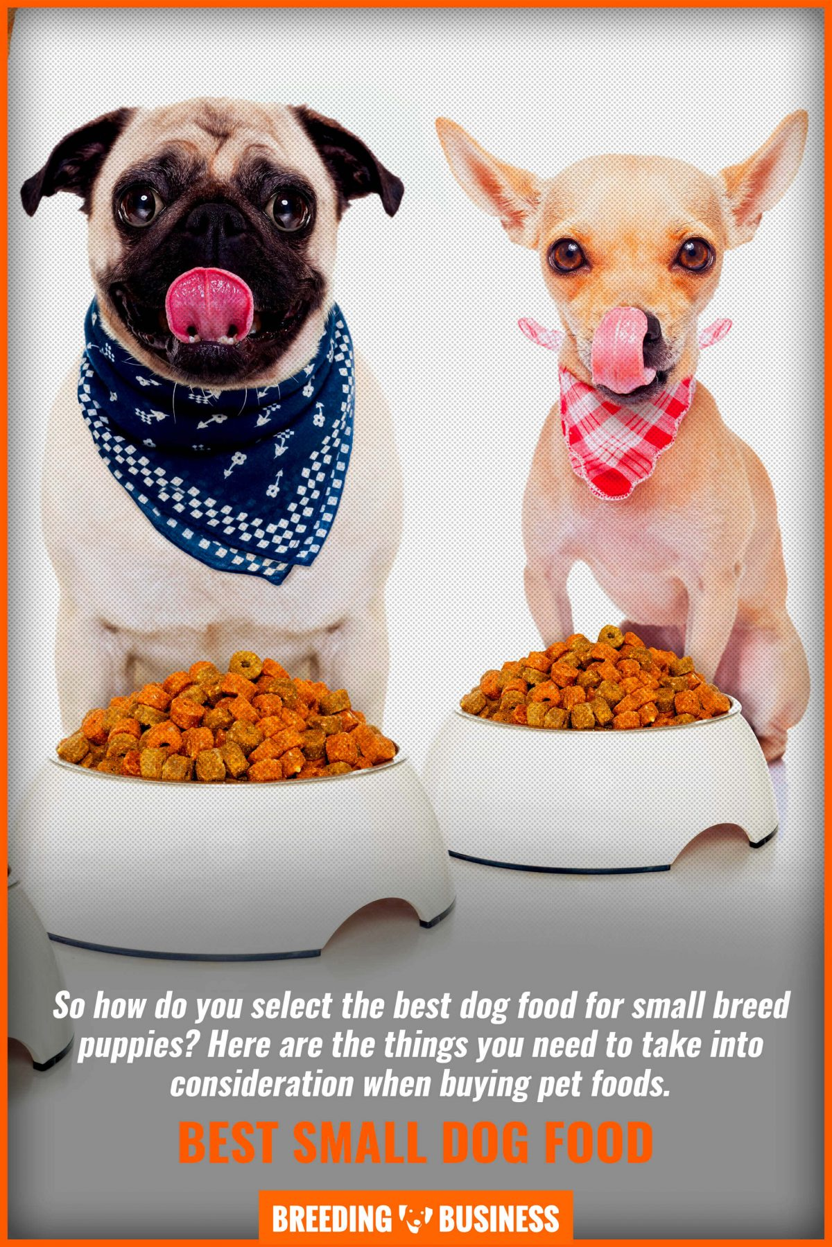 best small dog food