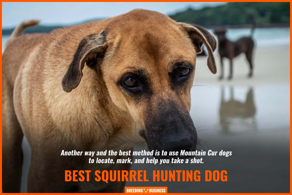 best squirrel hunting dog