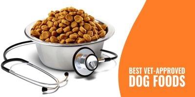 10 Best Vet-Approved Dog Foods