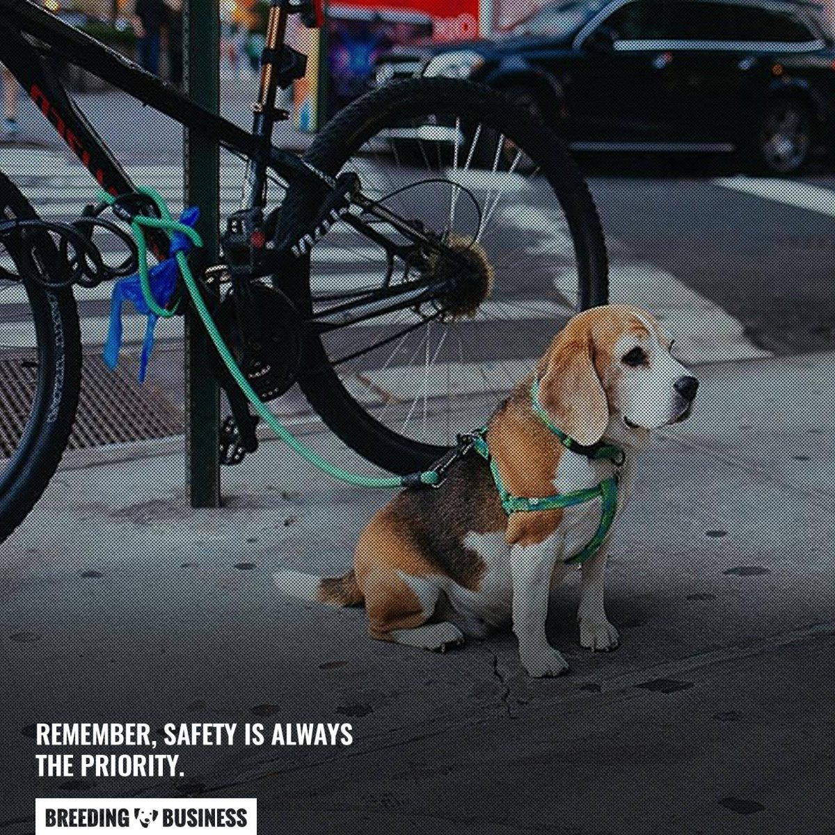 bicycle dog leash safety