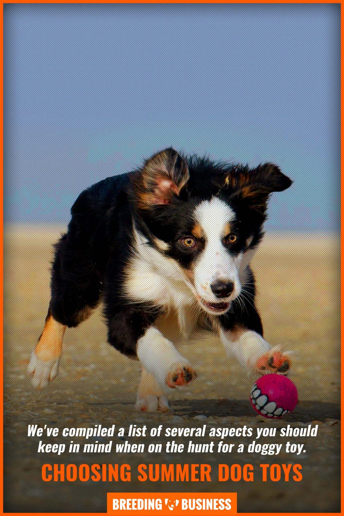 choosing summer dog toys