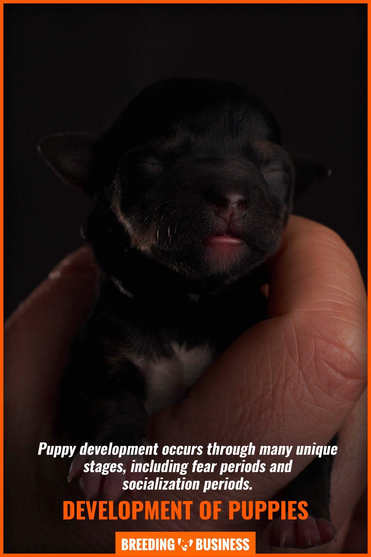 development of puppies