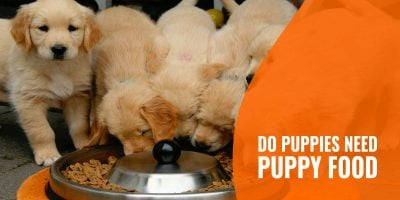 do puppies need puppy food