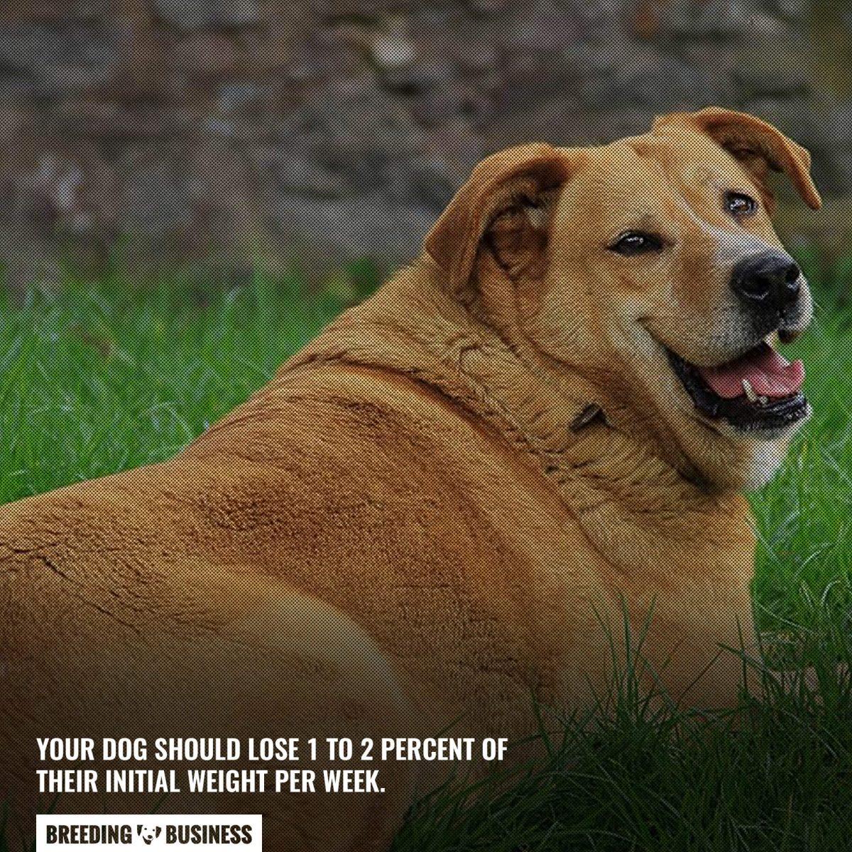 dog weekly weight loss