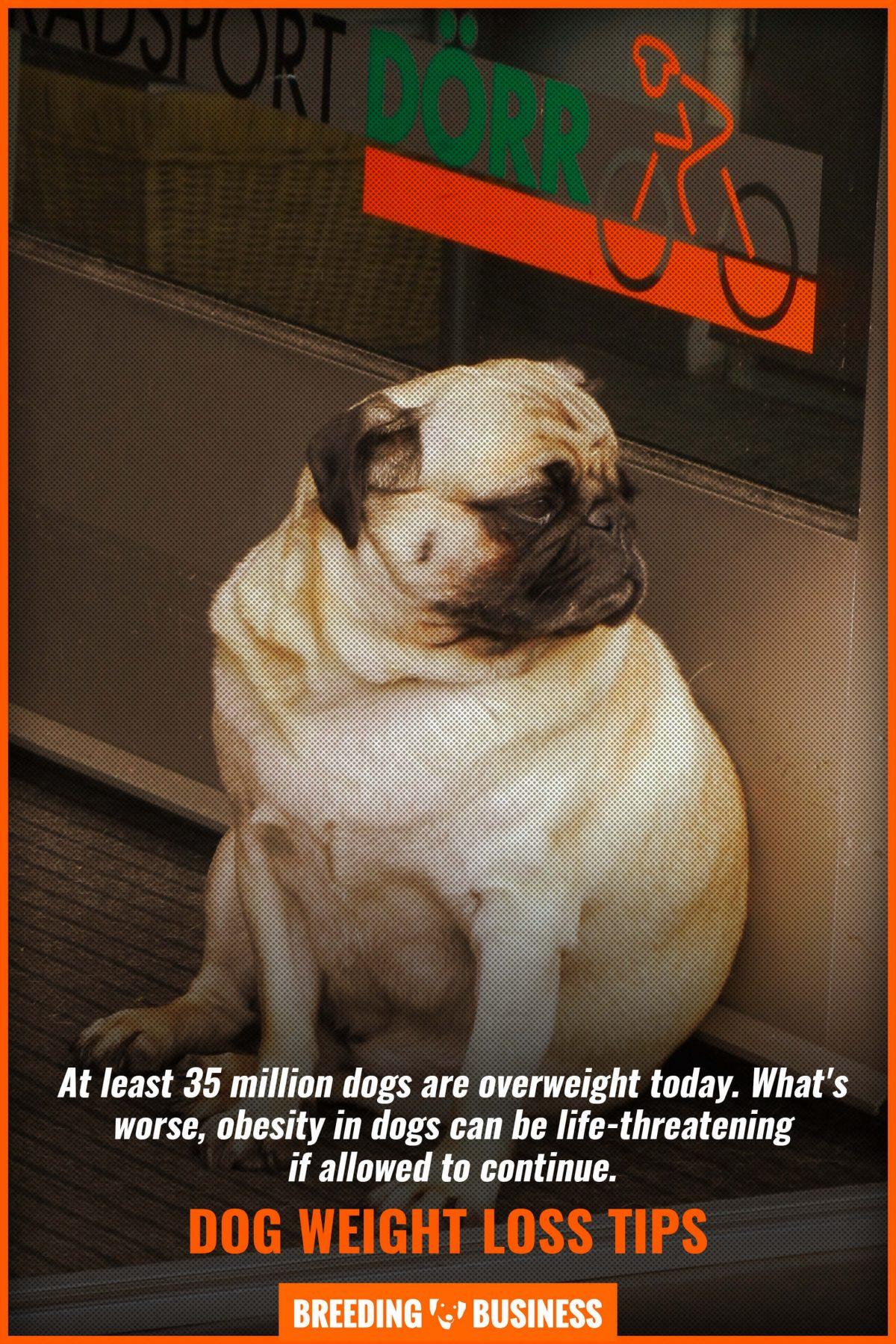 dog weight loss tips