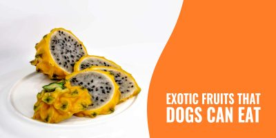 exotic fruits that dogs can eat