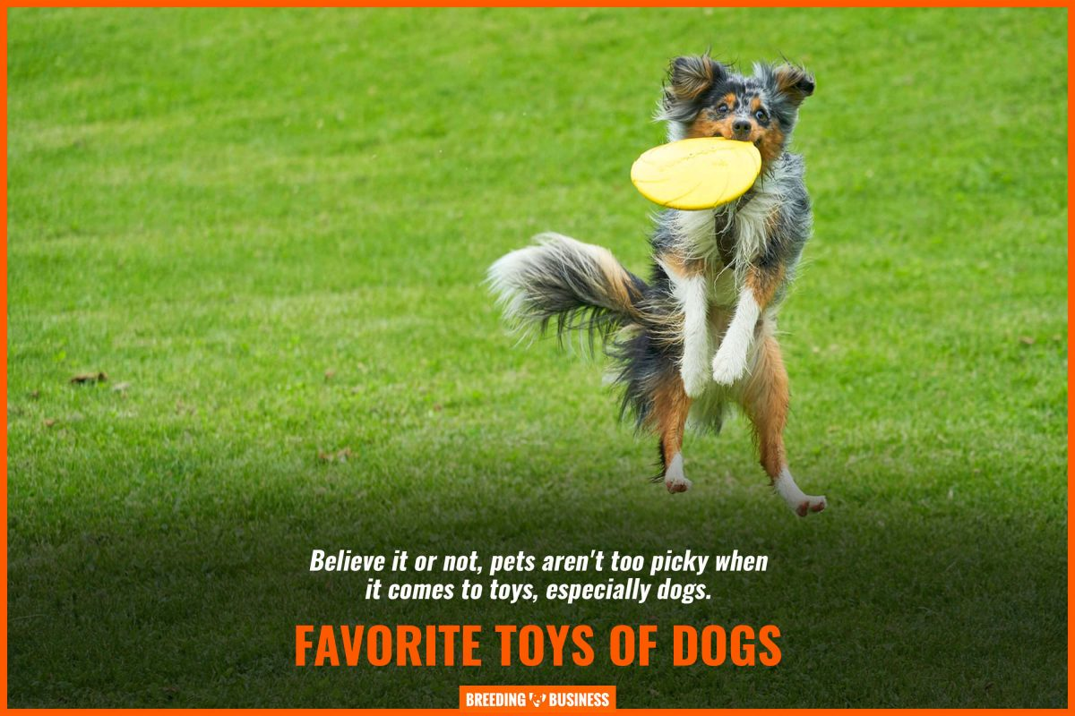 favorite toys of dogs
