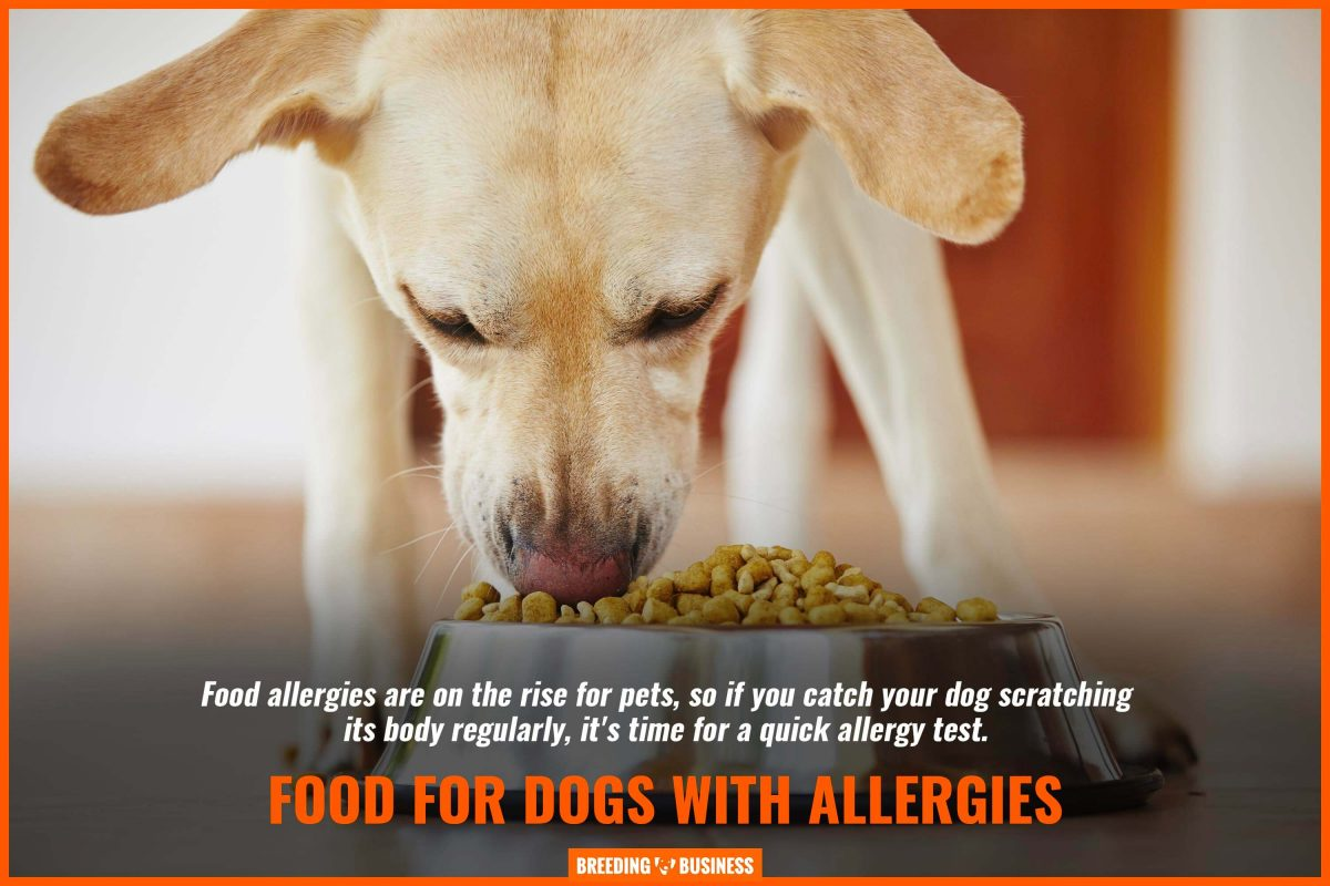 food for dogs with allergies