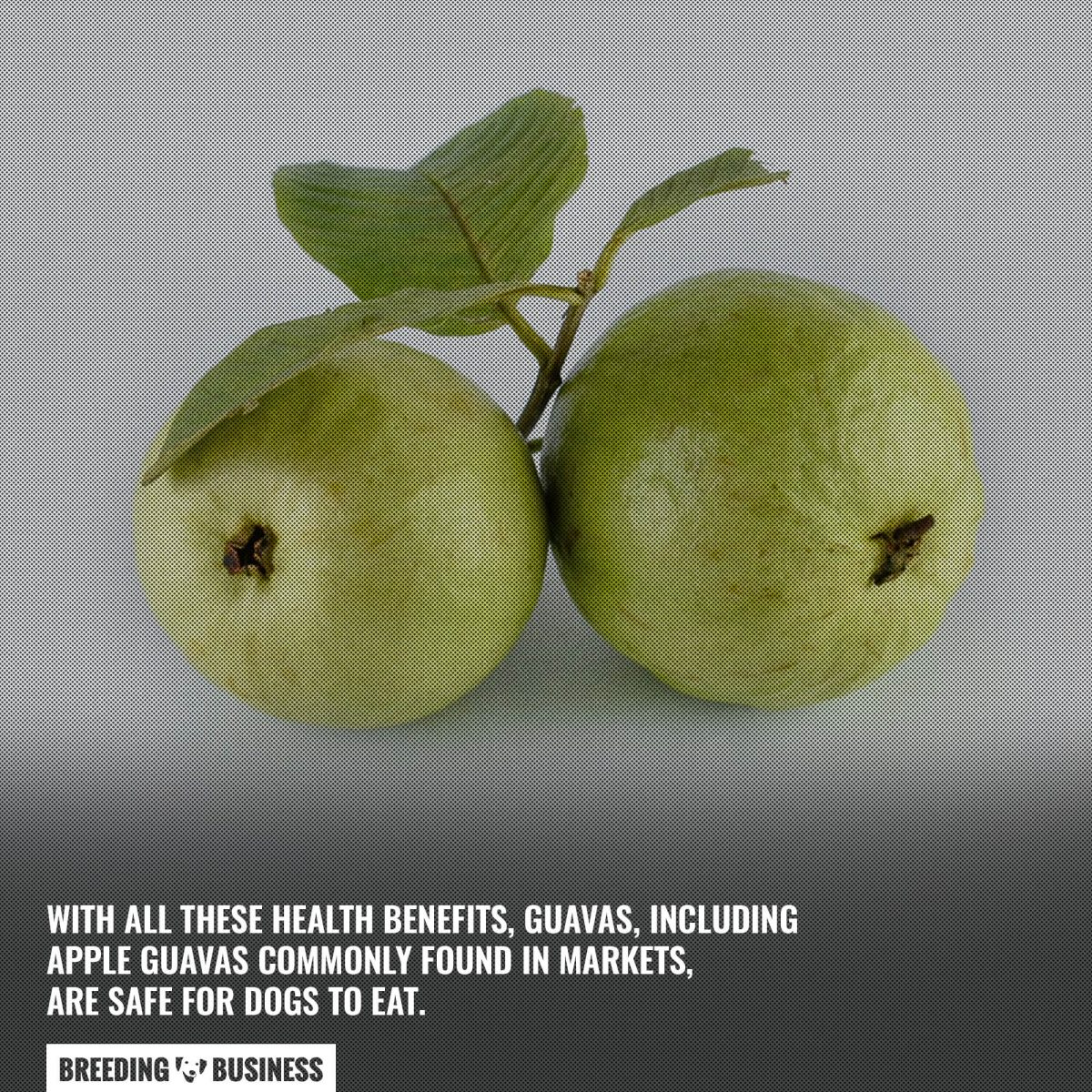 guava for dogs