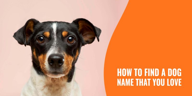 how to find a dog name that you love