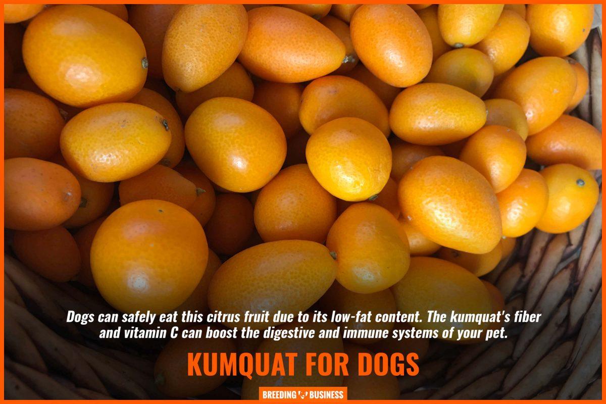 kumquat for dogs