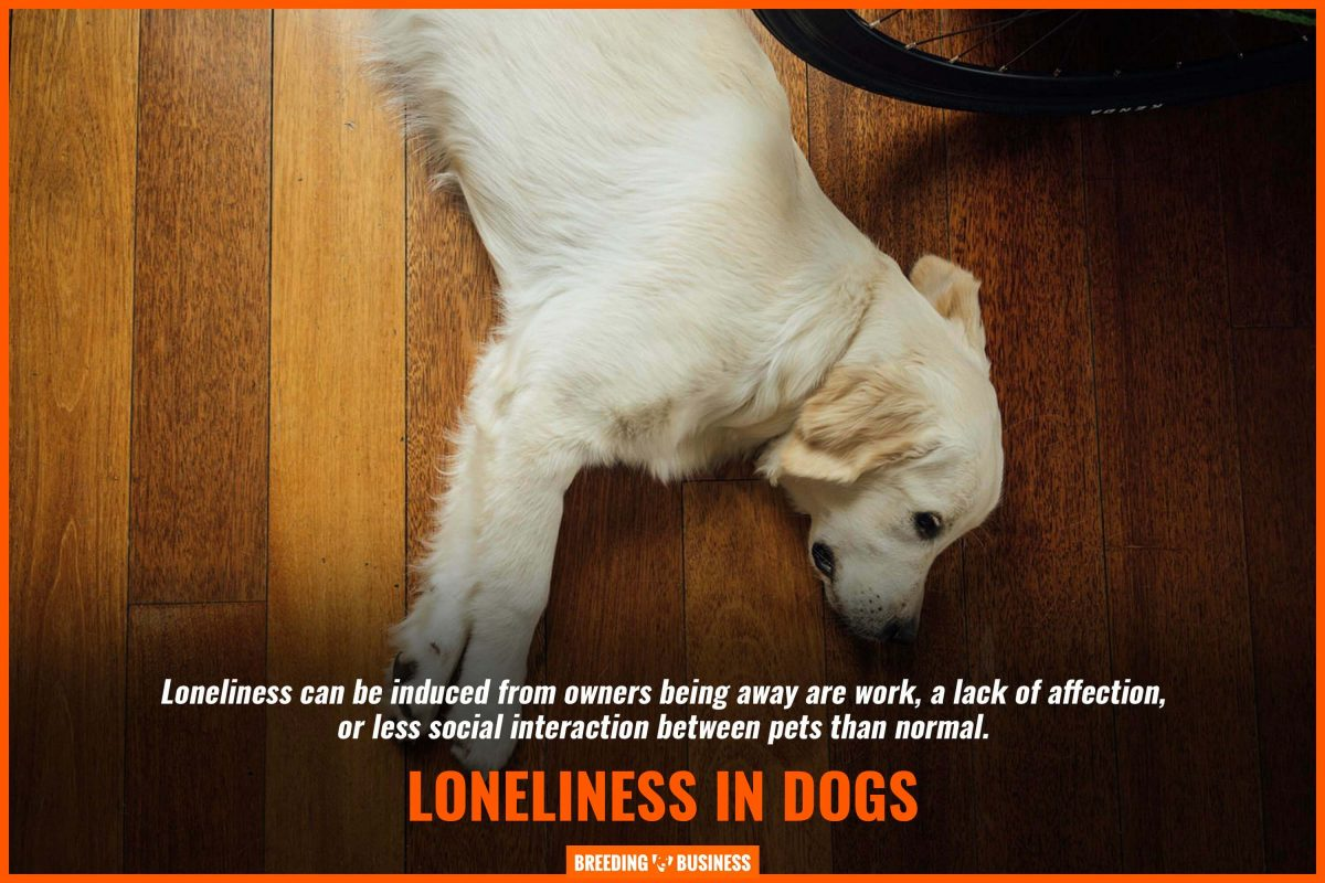 loneliness in dogs