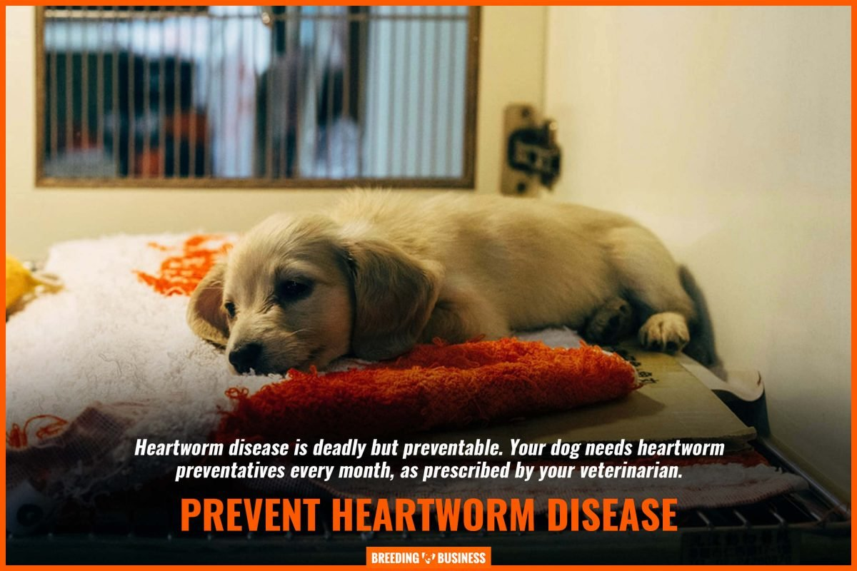 prevent heartworm disease