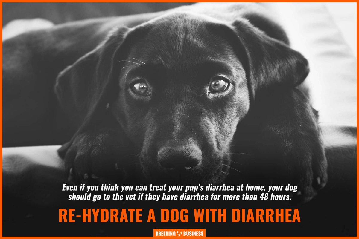 re-hydrate a dog with diarrhea