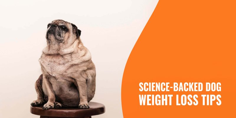 science backed dog weight loss tips