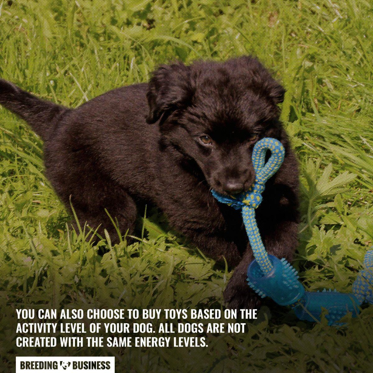 summer dog toy based on activity level