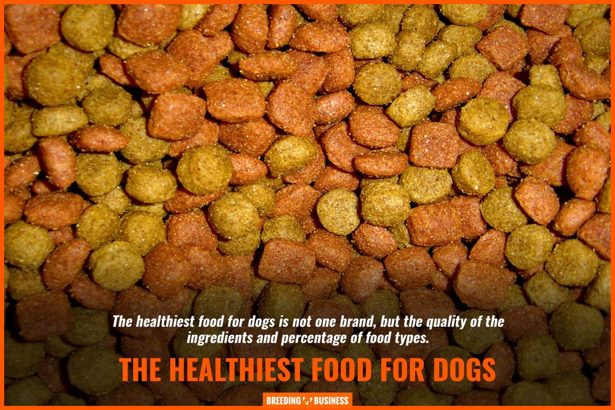 the healthiest food for dogs