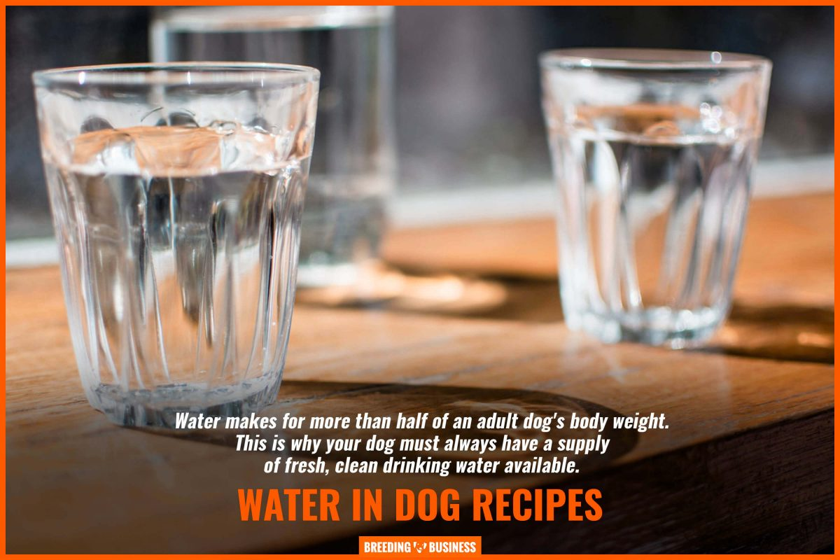 water in dog recipes